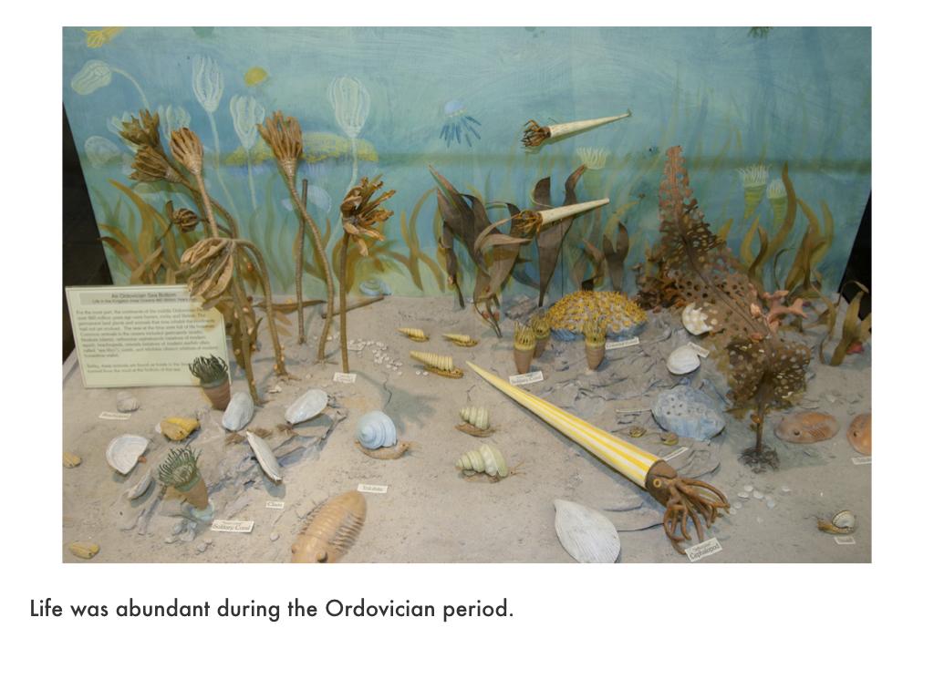 Ordovician Period.023.jpeg