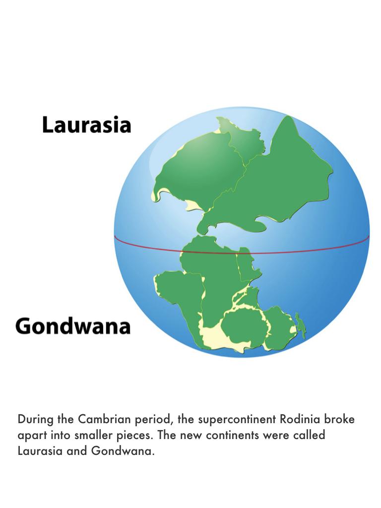 Cambrian Period.019.jpeg