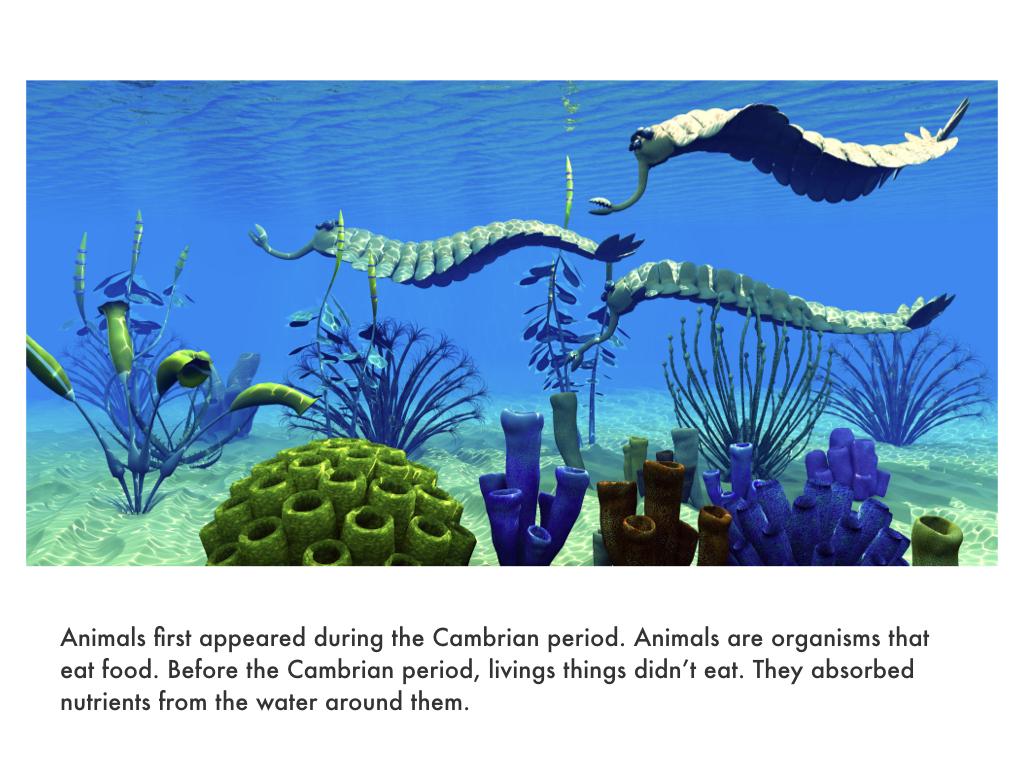 Cambrian Period.023.jpeg