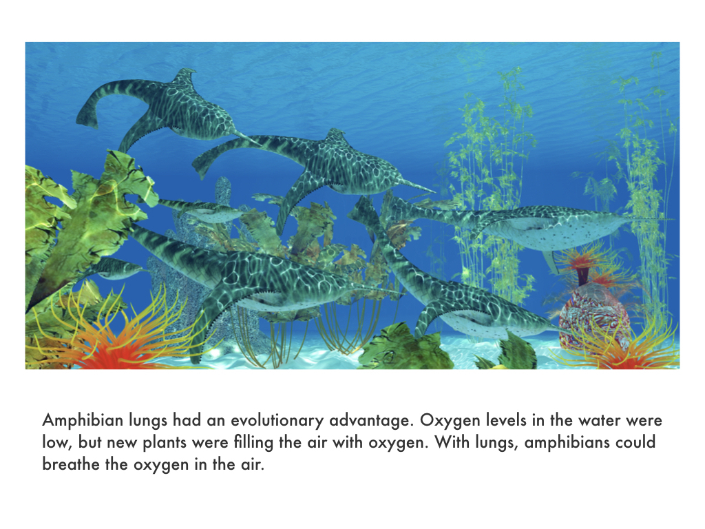 Devonian Period.037.jpeg