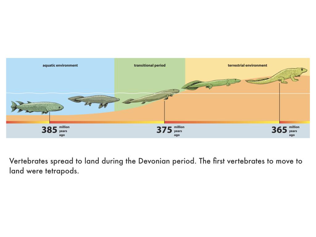 Paleozoic Era.027.jpeg