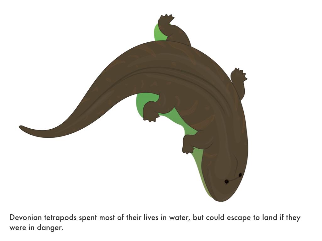 Paleozoic Era.028.jpeg