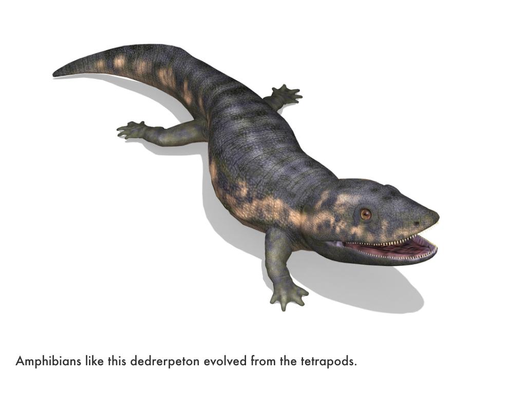 Paleozoic Era.029.jpeg