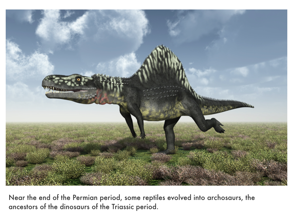 Paleozoic Era.035.jpeg