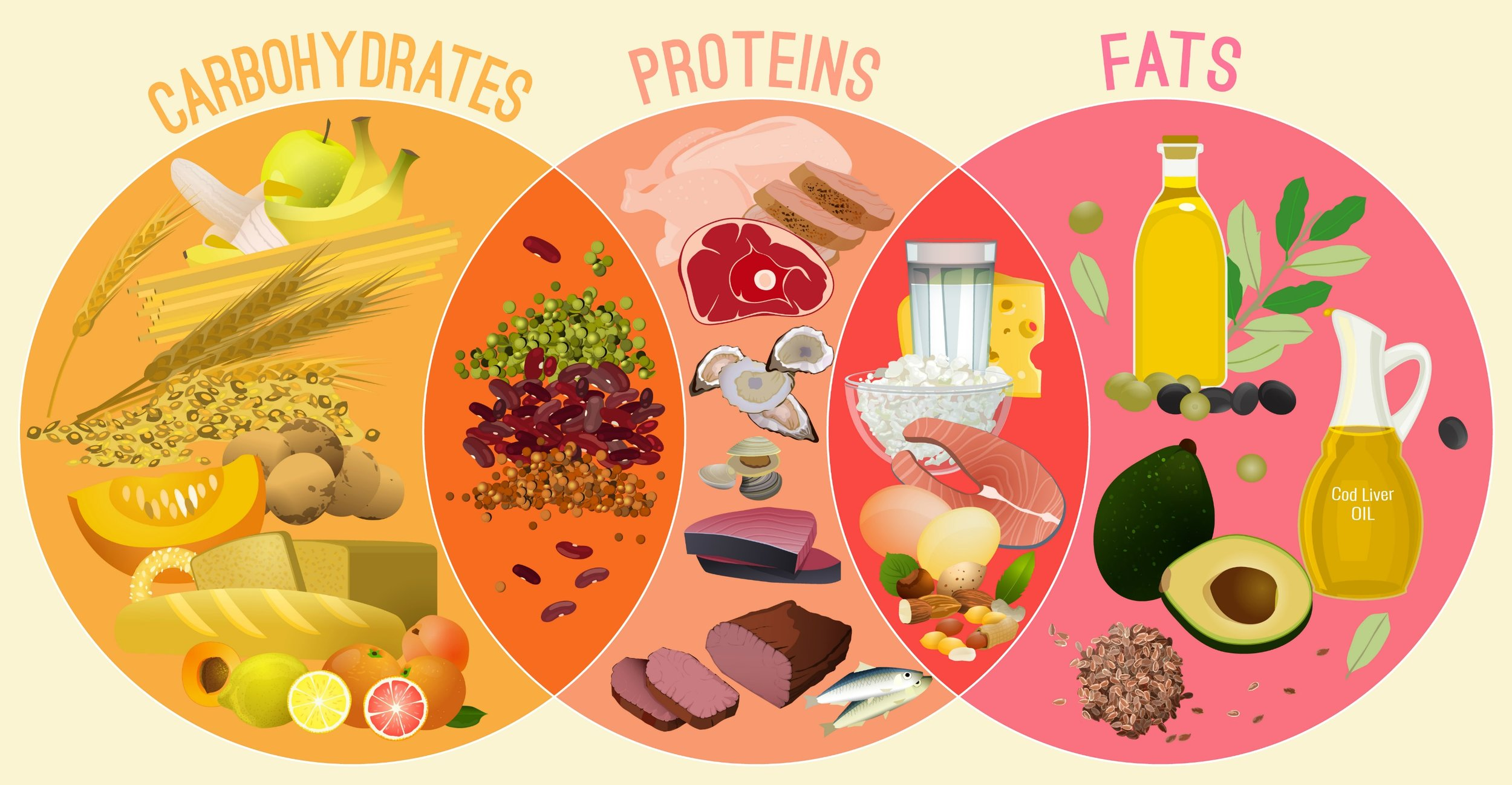 The foods we eat contain carbohydrates, proteins, and fats. Digestion breaks down carbohydrates into glucose molecules, proteins into amino acids, and fats into fatty acids. Our cells convert the chemical energy from glucose, amino acids, and fatty acids into mechanical energy and heat.