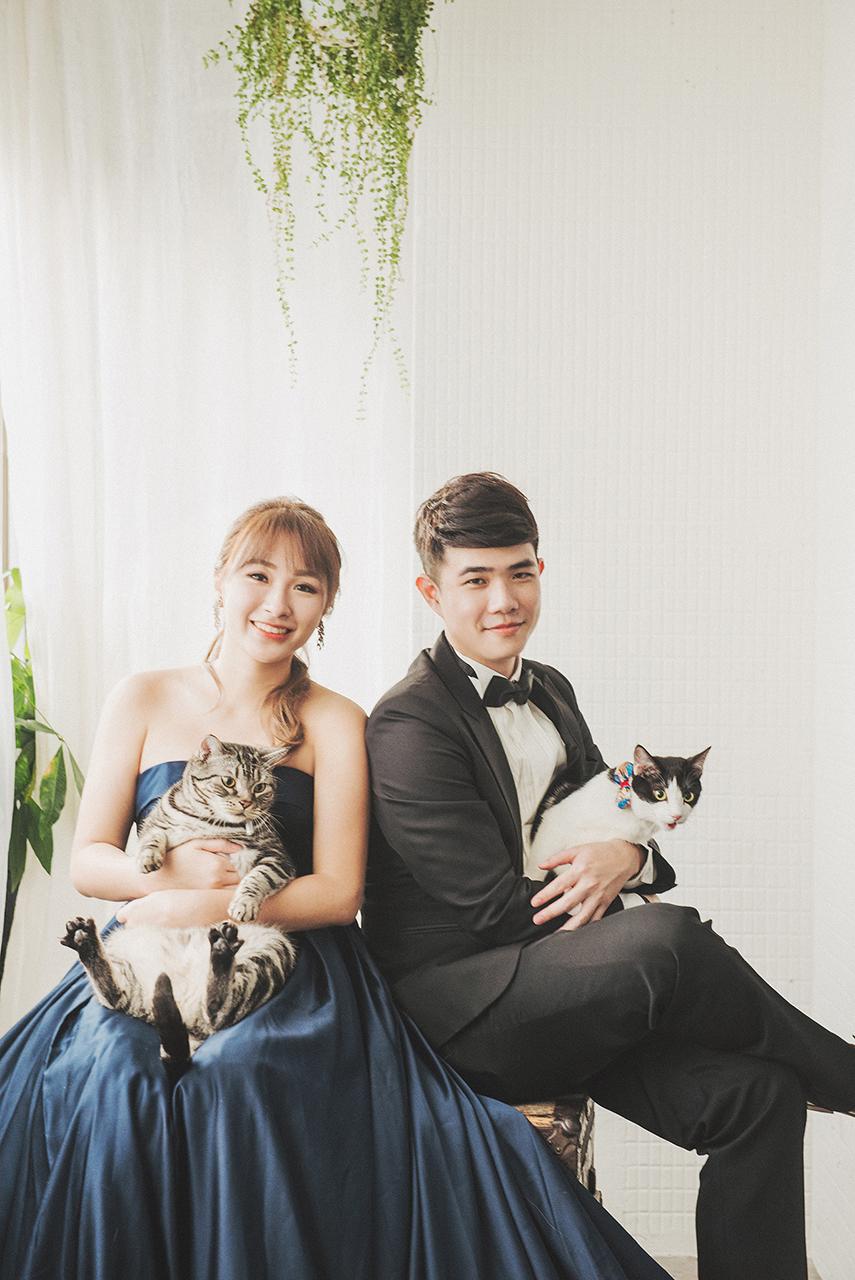 寵物,貓咪寫真,婚紗棚拍