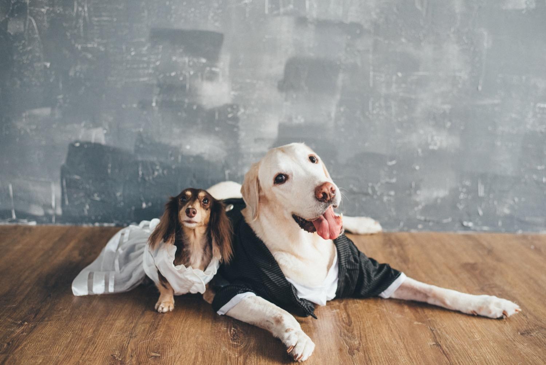 寵物寫真,狗狗婚紗