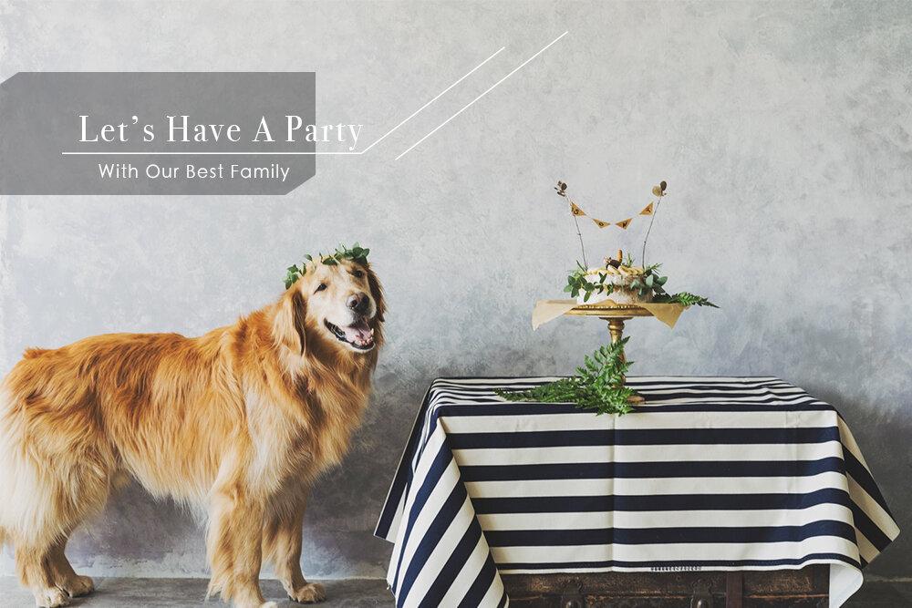 寵物派對寫真,寵物攝影,活動攝影,派對攝影