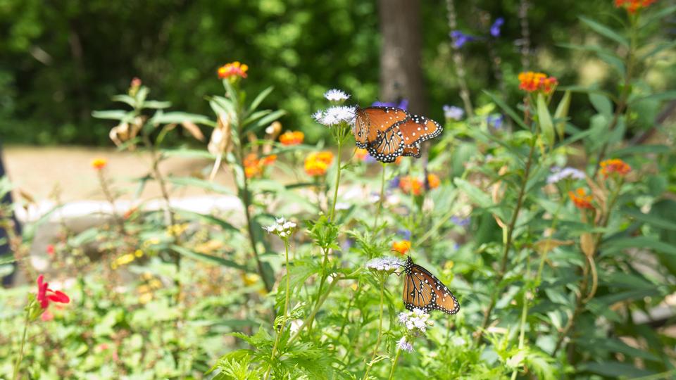 butterfly_garden.jpg