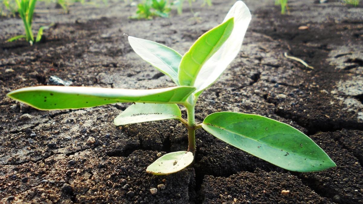 life_begin_nature_green_plant_agriculture_seedling_growing-1088924.jpg!d.jpeg