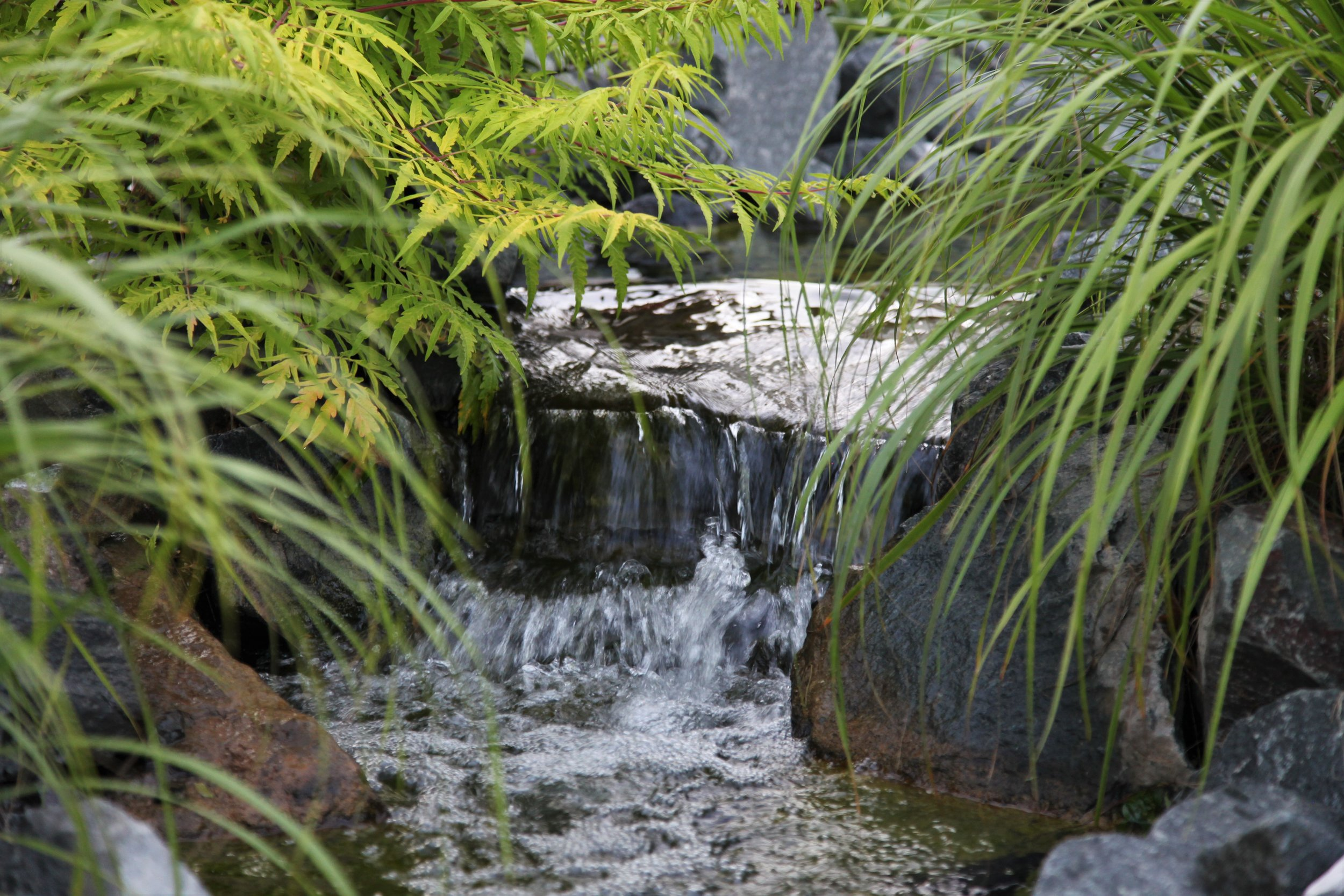 Moms Design Build - Pond Water Feature Water Plants