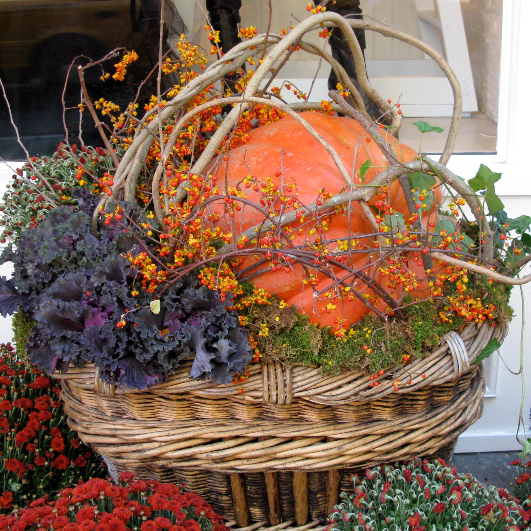 pumpkin in pots.png