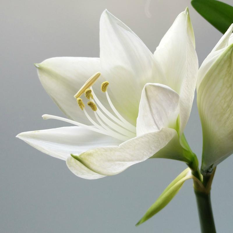 petals cork lilies.png