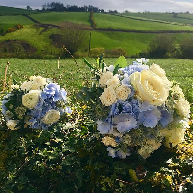 Last Friday's wedding bouquets, in the beautiful surrounds of Killarney (and my homeland!) Congratulations to the lovely Eileen and Derek ❤️#blue #hydrangea #ranunculus #whiteroses#summerflowers #green#landscape#weddingflowers#corkcity#florist