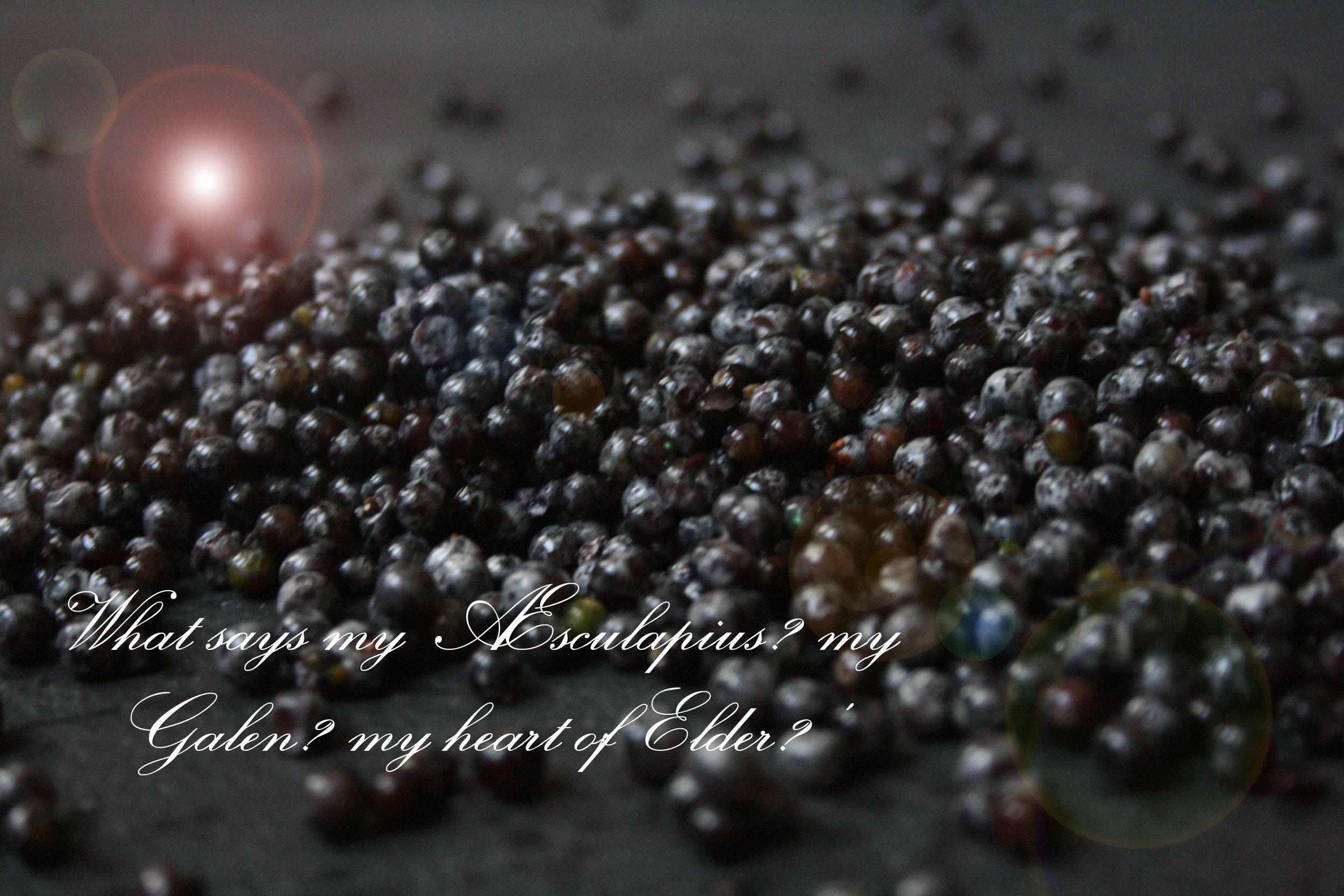 elderberry-2.jpg