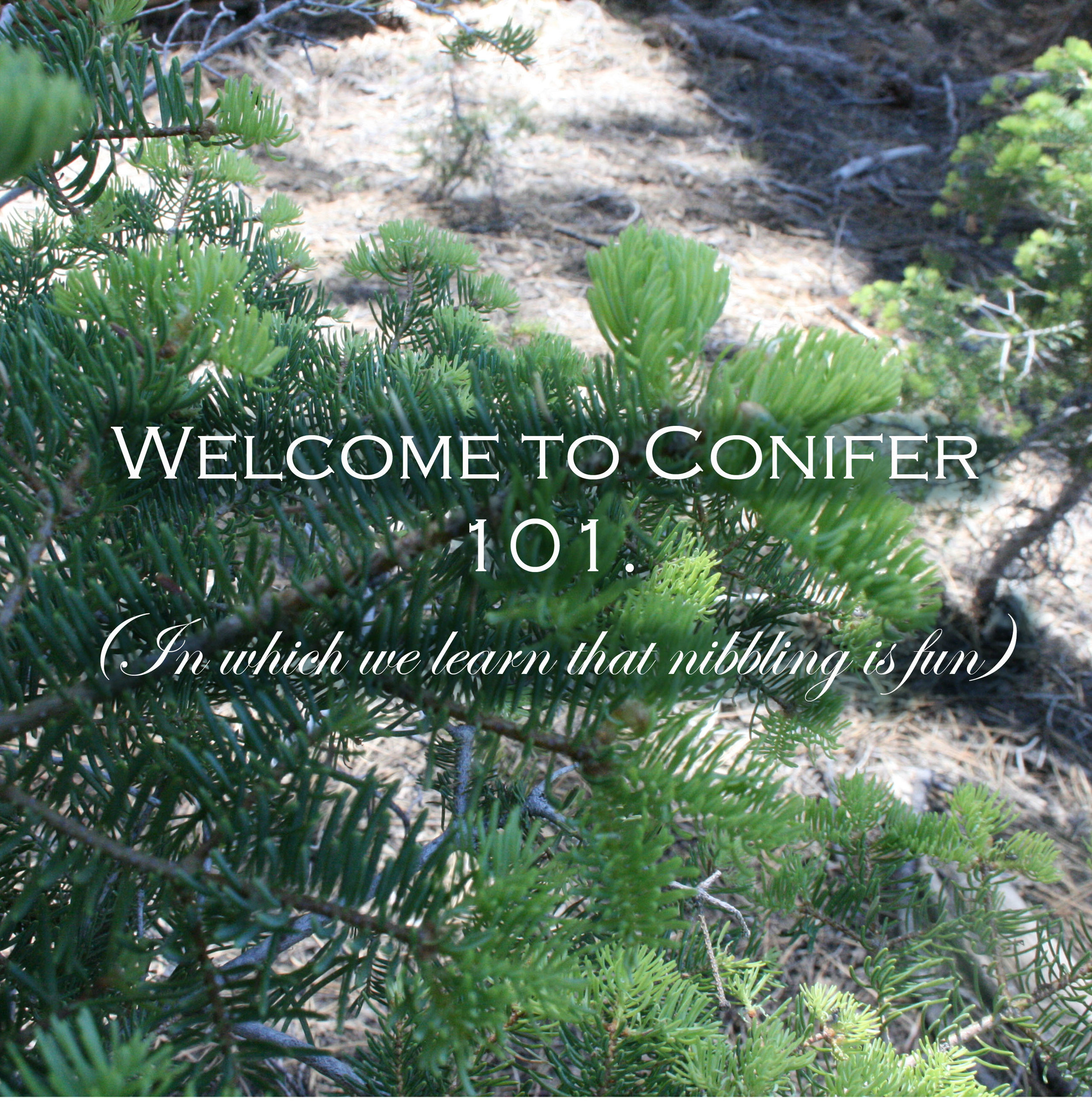 WELCOME-TO-CONIFER-101.jpg