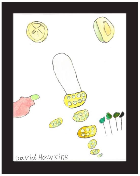 """Vegetables"" by David Hawkins (of L.A. Goal)"