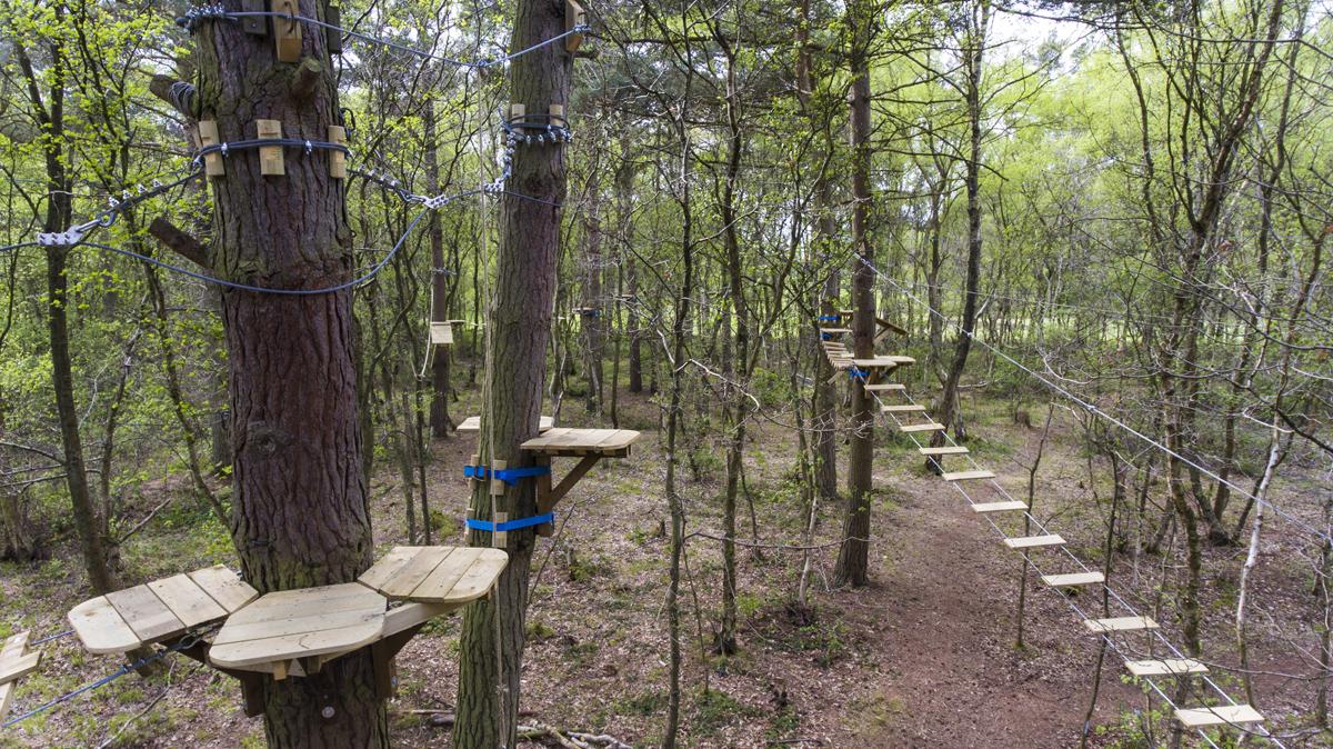 wild-pines-full-size-47.jpg