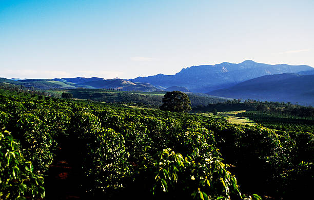 alpine coffee plantations = unsurprisingly beautiful [getty images]