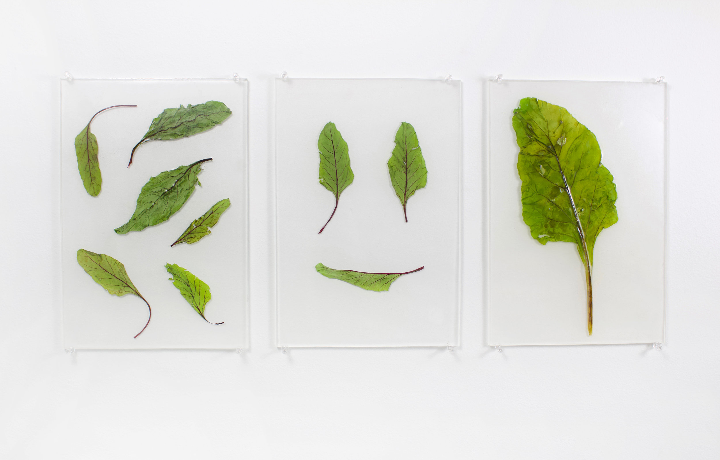 Beet Leafs Encased in Resin For the collaboration with Likewise Magazine Issue Two