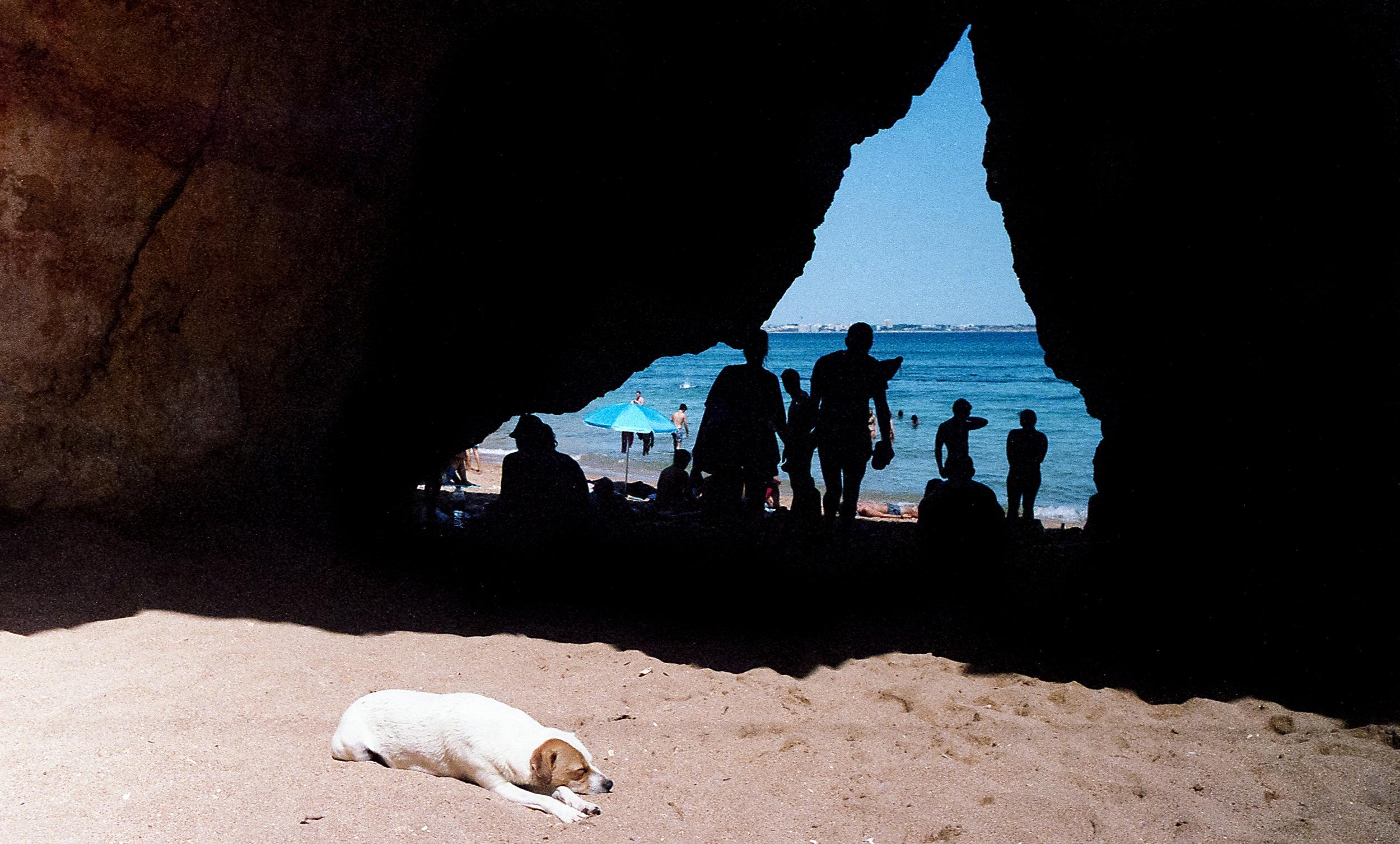 Dog on a beach in Lagos, Portugal. Summer 2017 (Portra 400)