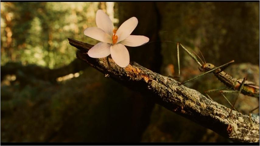 pans-labyrinth-flower.jpg