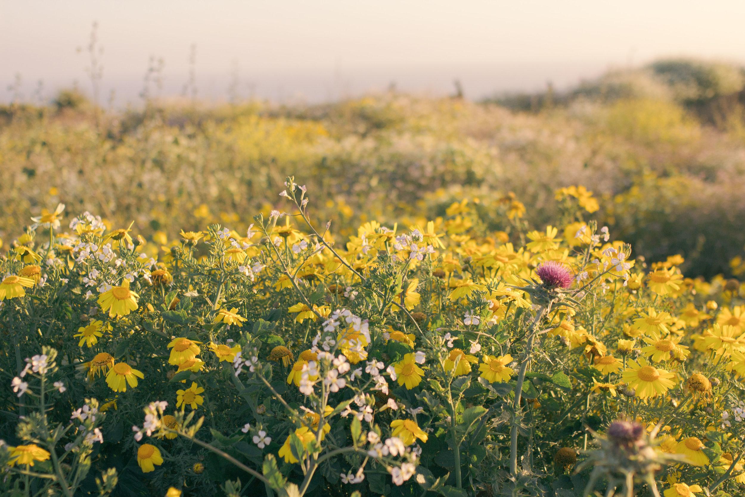 spring-summer 3594 (1 of 1).jpg