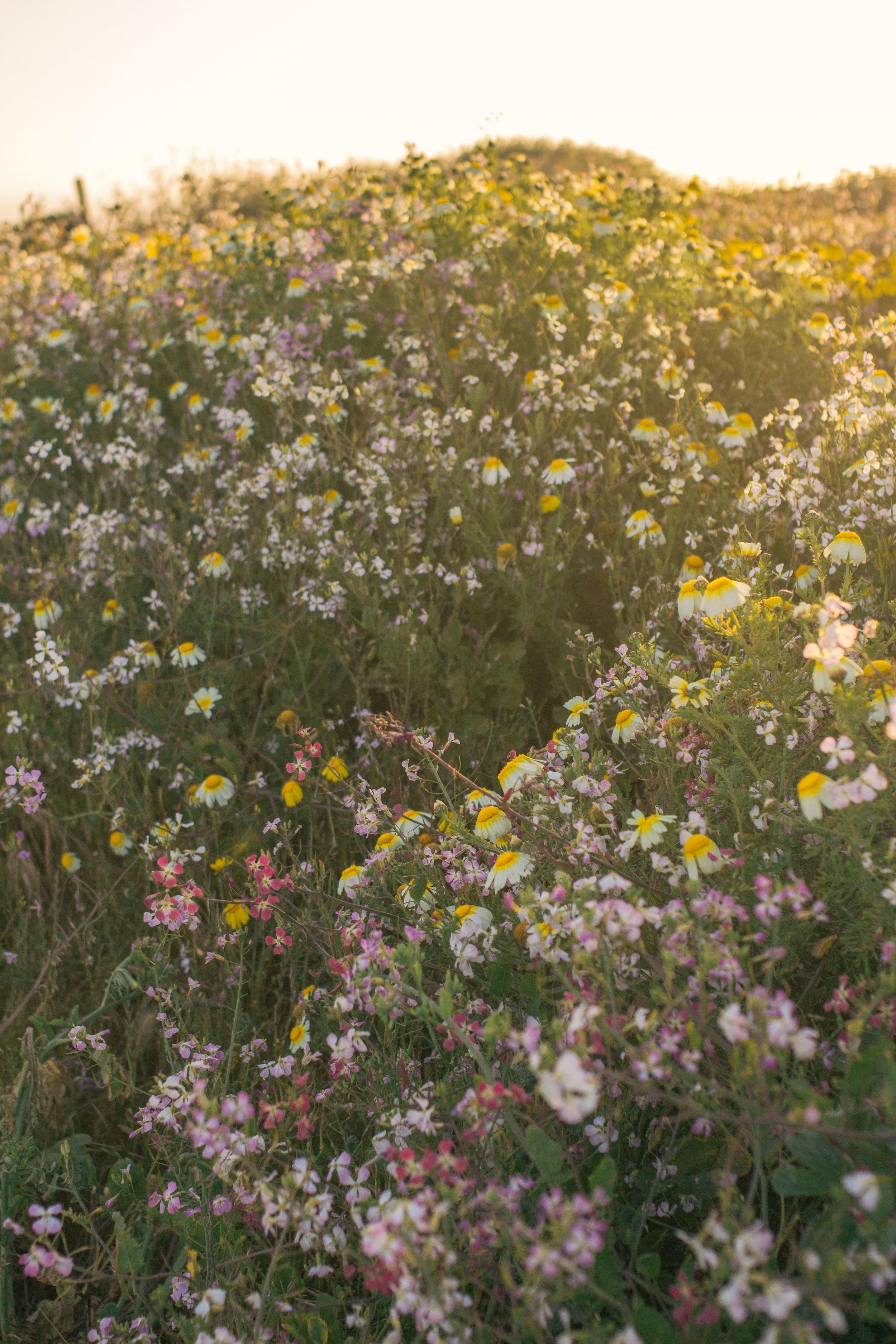 spring-summer 3602 (1 of 1).jpg