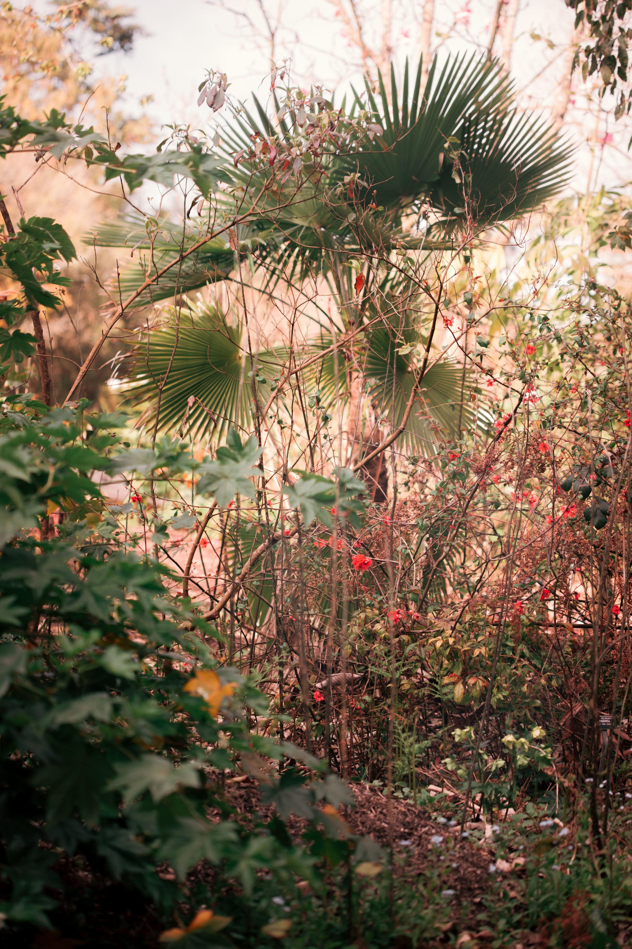 9632 botanical gardens (2 of 2).jpg