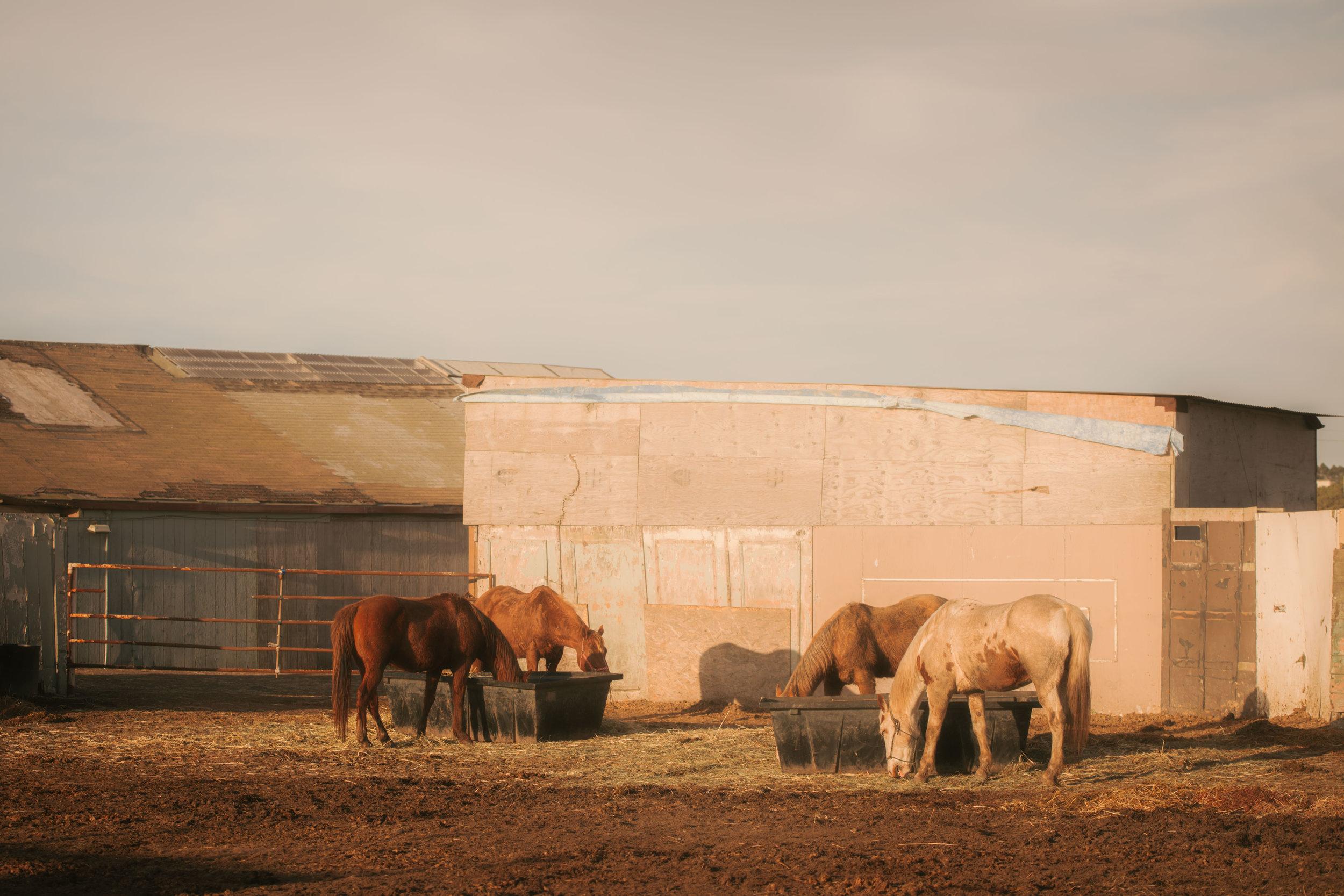 9710 horses (1 of 1).jpg