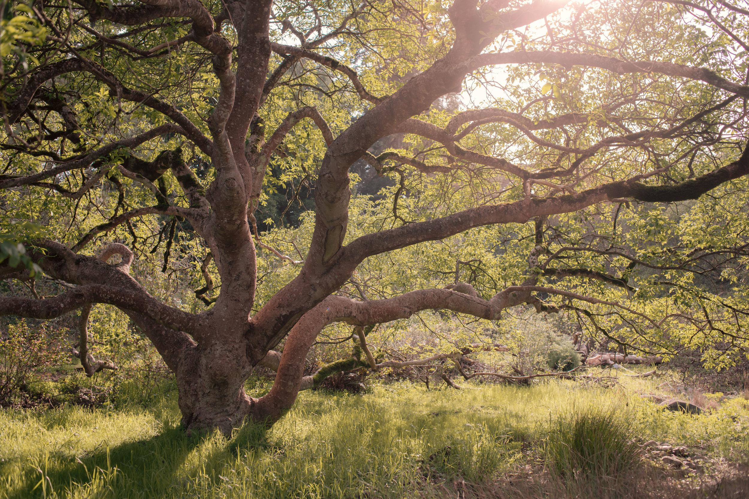 9553 tree (1 of 1).jpg