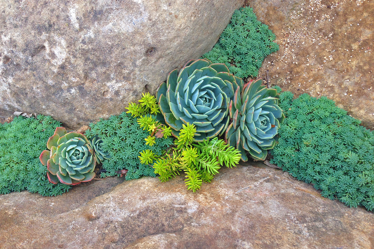 SucculentCrack_Scribner.jpg