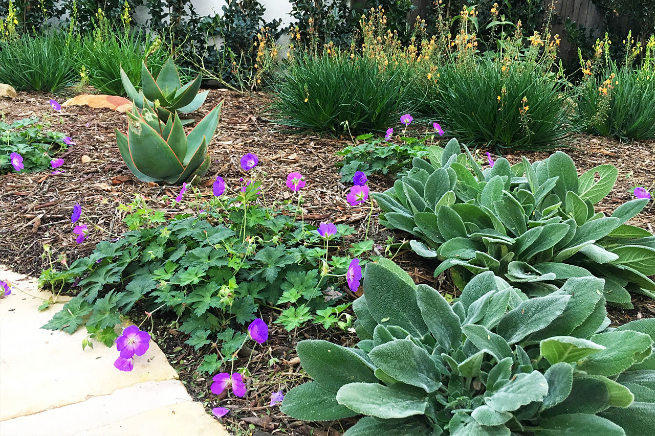 Colorful_Drought_Tolerant_Garden.jpg