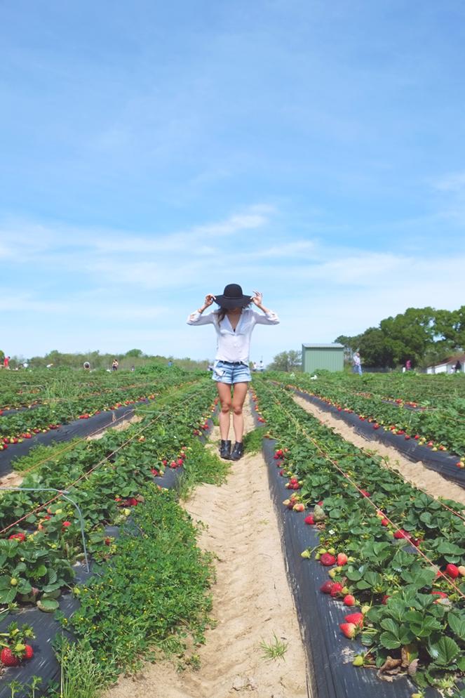 strawberryfields_01