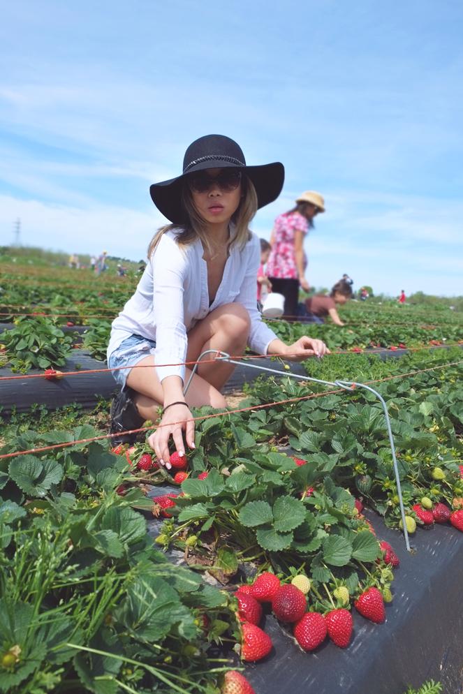 strawberryfields_05