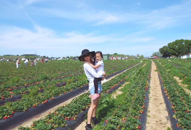 strawberryfields_06