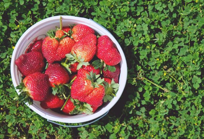 strawberryfields_07