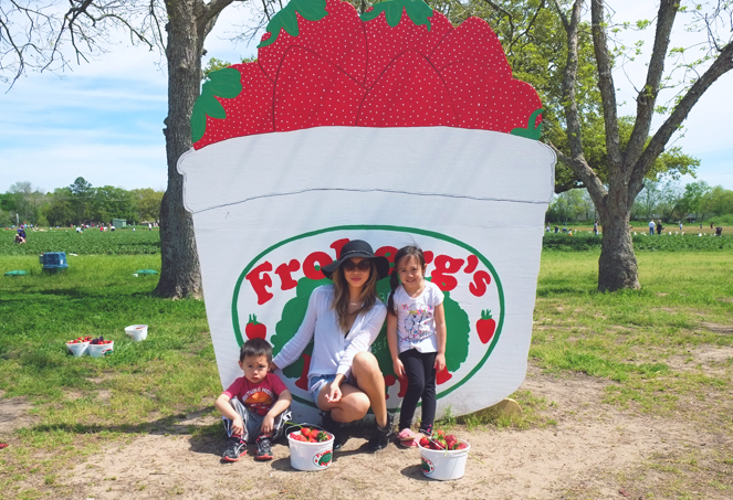 strawberryfields_08