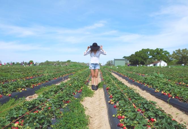 strawberryfields_09