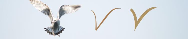 birdprocess.jpg
