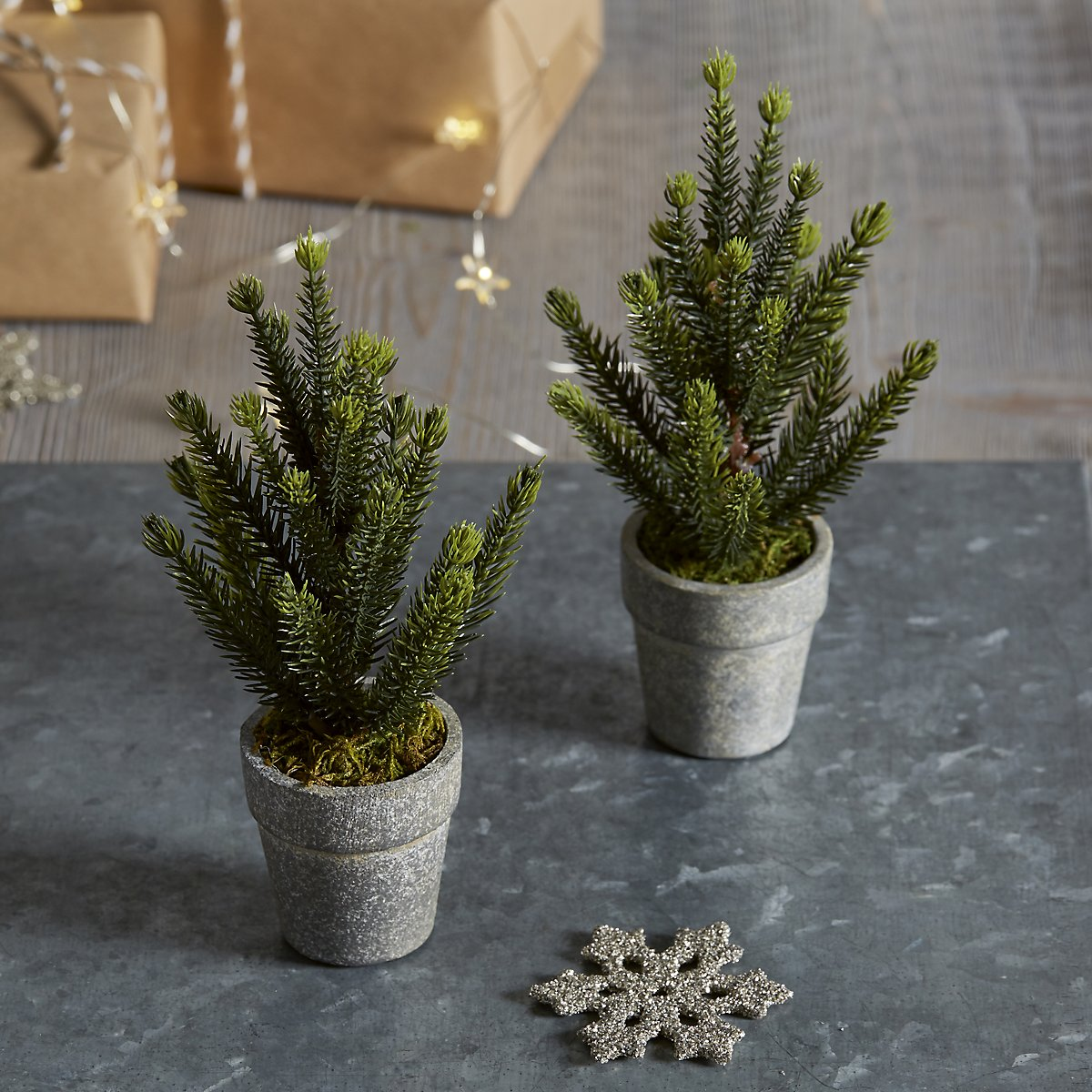 Mini Potted Spruce Christmas Tree £8.40
