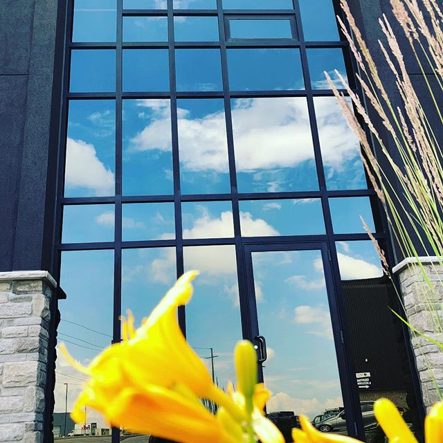 Commercial window cleaning on this gorgeous day last week 🌼