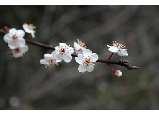 flower blossom.jpg