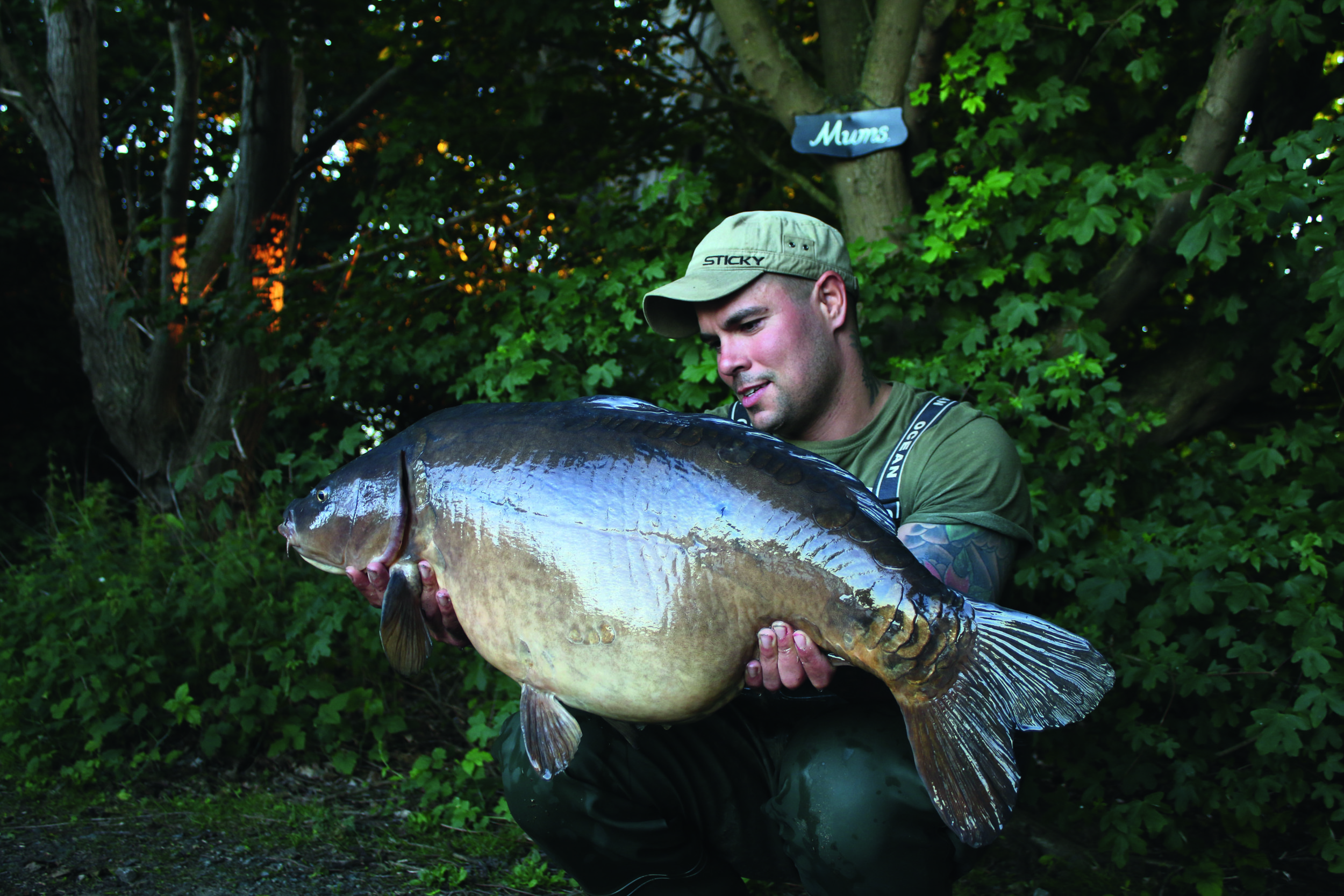 The Pikey Mirror at over 35lb, another lovely Manor fish.