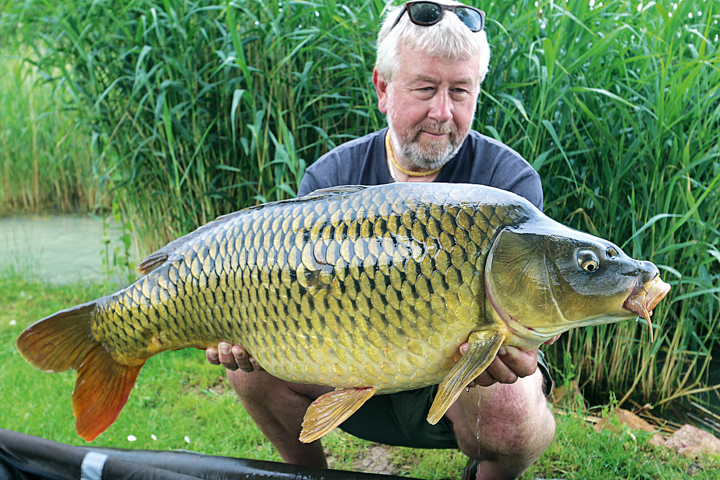 12-A-cracking-common-in-amongst-a-run-of-good-fish.jpg