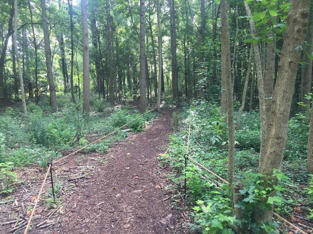 Trail ReRouting Mid Way 1 (2).jpg