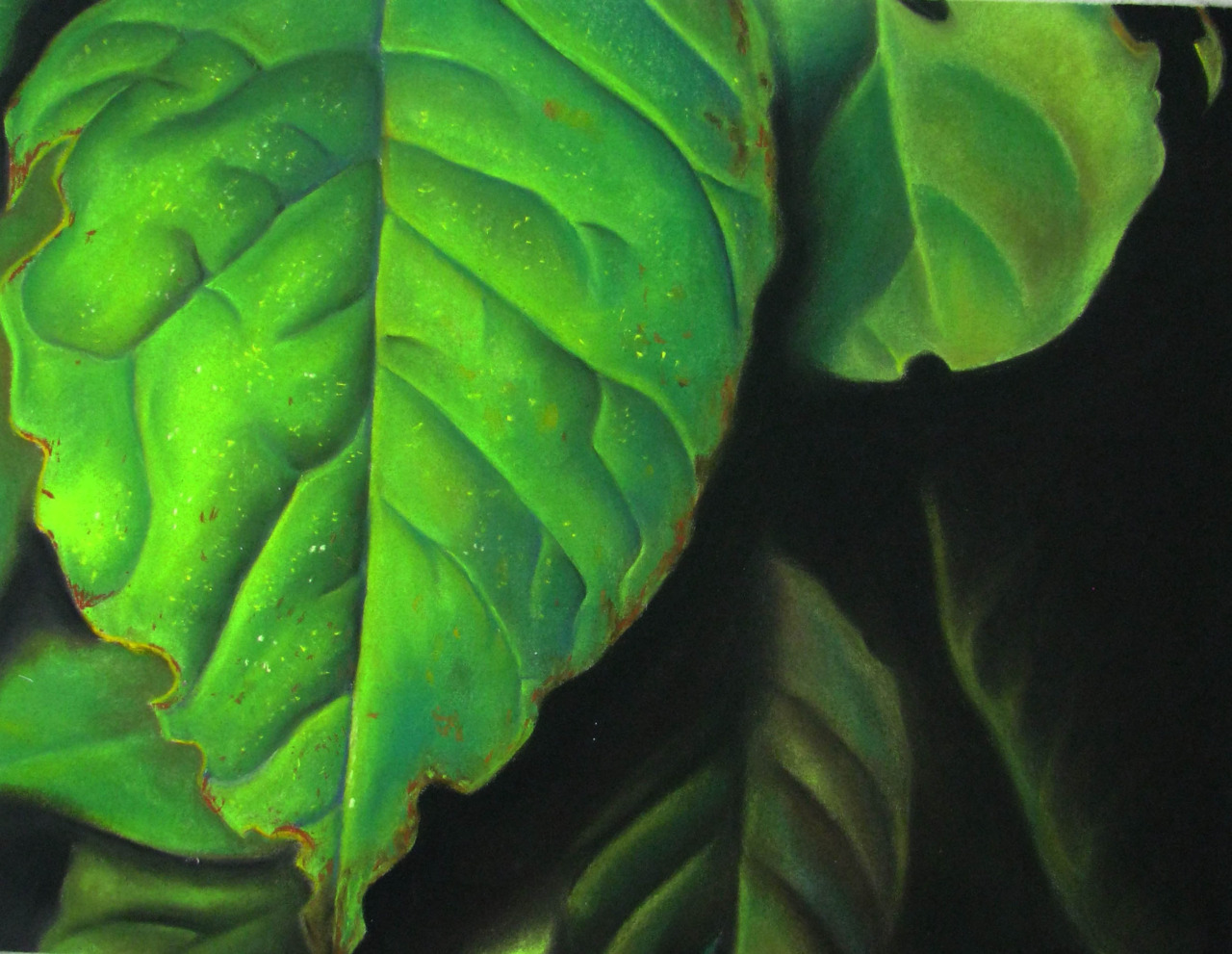 Leaves   2011. Chalk pastel on paper. 19 x 25.