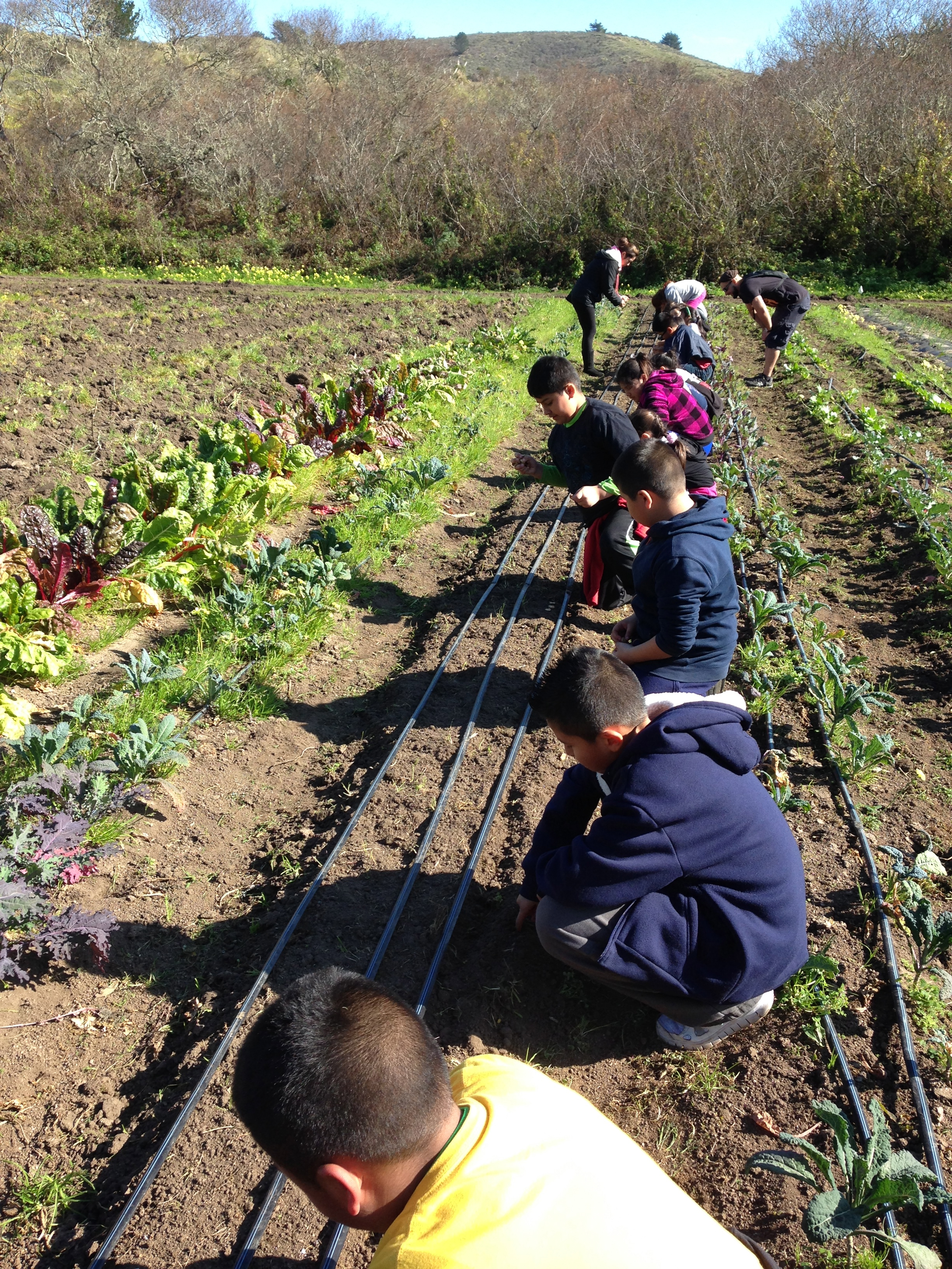 Started the San Mateo School Farm in 2010, a 2-acre educational farm that provides hands on learning opportunities to students across San Mateo County, regardless of income -