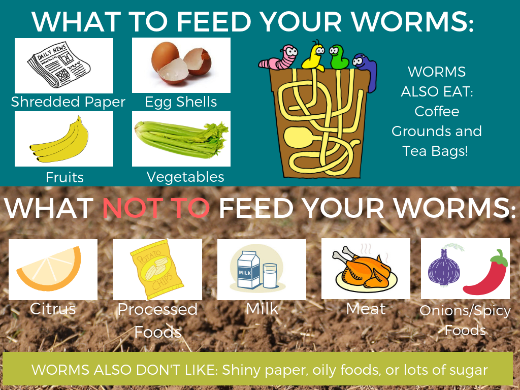 WHAT TO FEED YOUR WORMS_.png