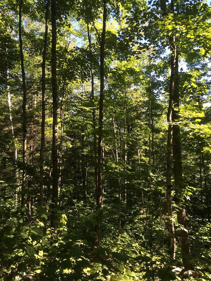 Wheeler's woods 4.jpg